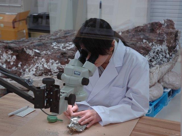 恐竜の化石クリーニング作業 /兵庫県立人と自然の博物館(三田市)