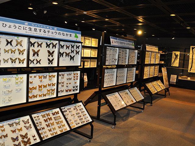 ひとはく多様性フロア /兵庫県立人と自然の博物館(三田市)