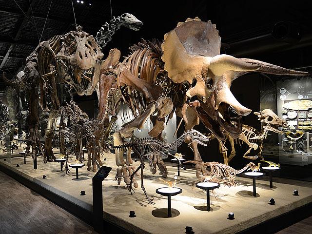 様々な恐竜の骨格標本の展示/御船町恐竜博物館(熊本県)