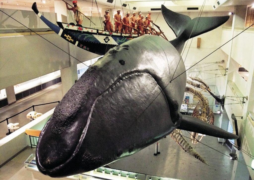 セミクジラの実物大模型/太地町立くじらの博物館(和歌山県)