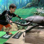 カブトムシ・クワガタ好きにおすすめの昆虫館など12選!展示・体験・ふれあいが満載