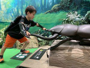 カブトムシ・クワガタ好きにおすすめの昆虫館など12選!展示・体験・ふれあい満載(2019年夏)
