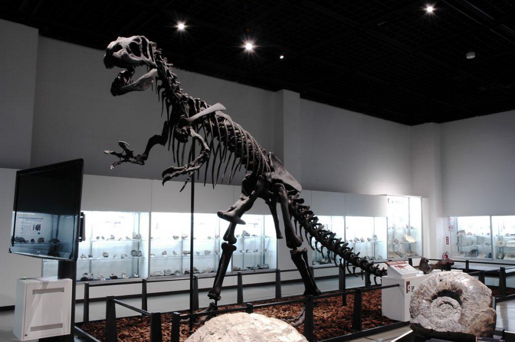 アロサウルスの全身骨格標本/三笠市立博物館(北海道)