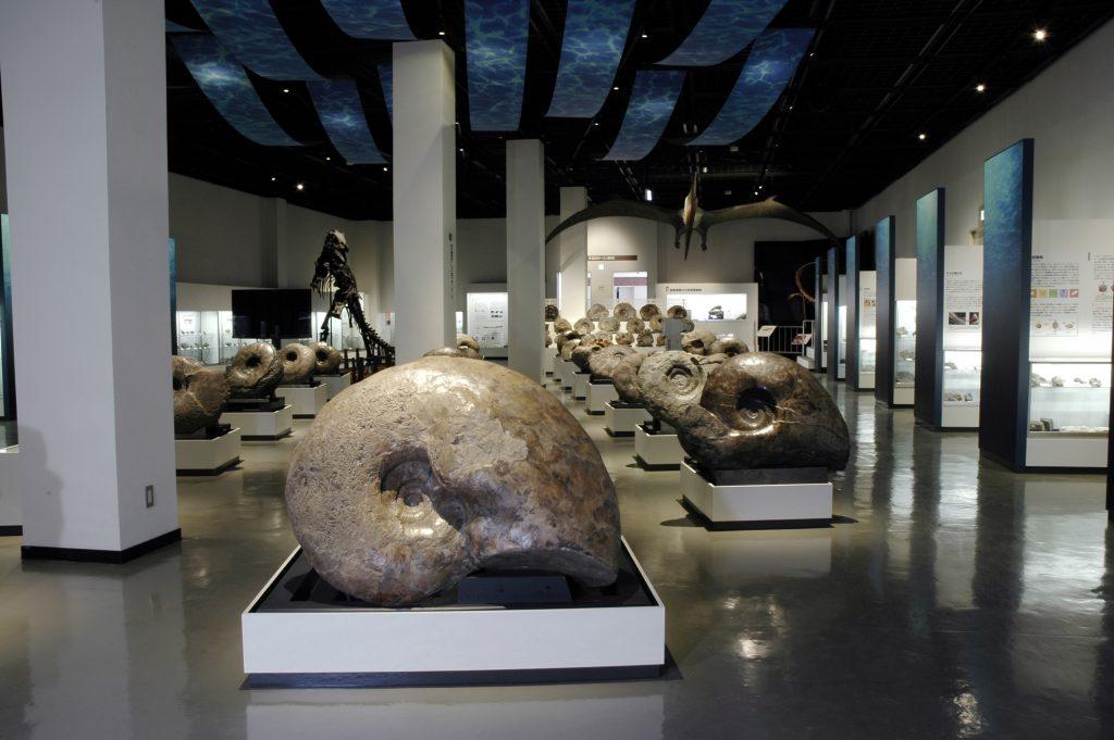 展示室1:アンモナイト/三笠市立博物館(北海道)