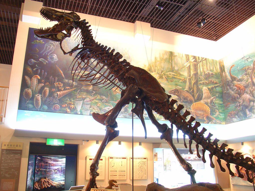 ティラノサウルスの骨格標本/滝川市美術自然史館(北海道)