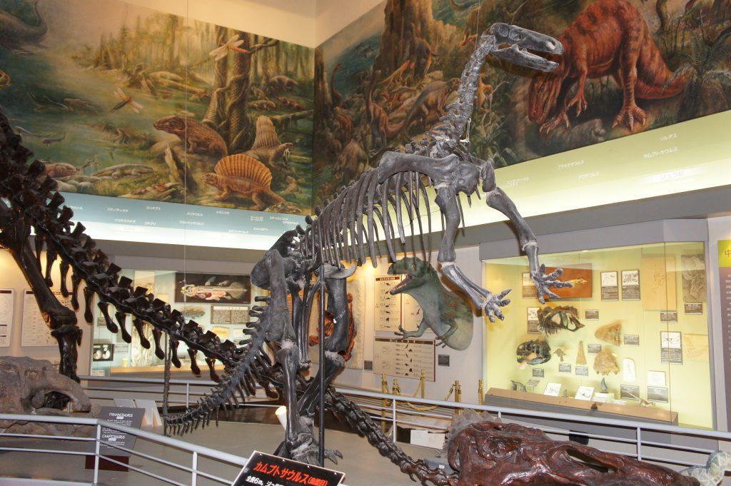 カムプトサウルスの全身骨格標本/滝川市美術自然史館(北海道)