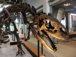 東北の恐竜の博物館・遊び場6選!日本で最初に発見されたモシリュウなど