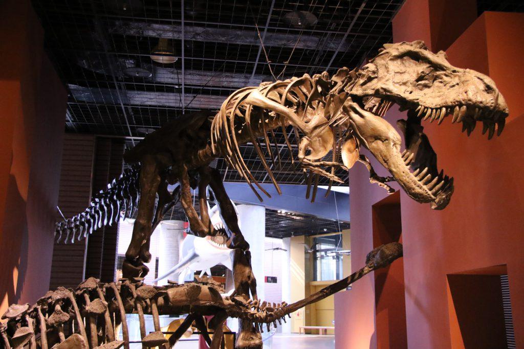 ティラノサウルス全身骨格/ミュージアムパーク茨城県自然博物館(茨城県/坂東市)