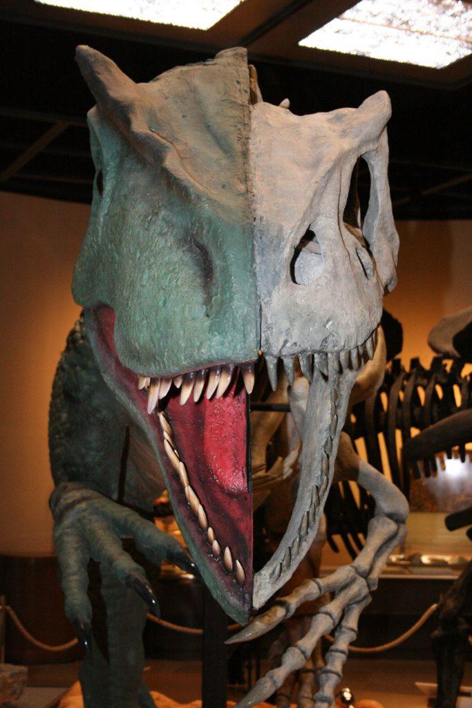 生態復元と骨格が半分ずつのアロサウルス/栃木県立博物館(栃木県/宇都宮市)