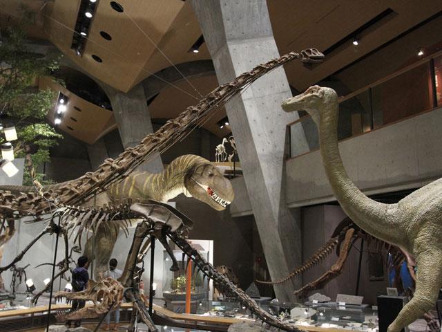 常設展示室「地球の時代」骨格標本など/群馬県立自然史博物館(群馬県/富岡市)