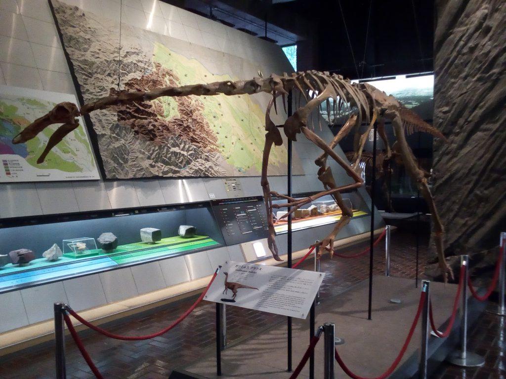 ガリミムス ブラツスの全身骨格標本/埼玉県立自然の博物館(埼玉県/長瀞町)