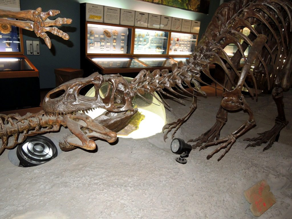 アロサウルス復元骨格/信州新町化石博物館(長野県/長野市)