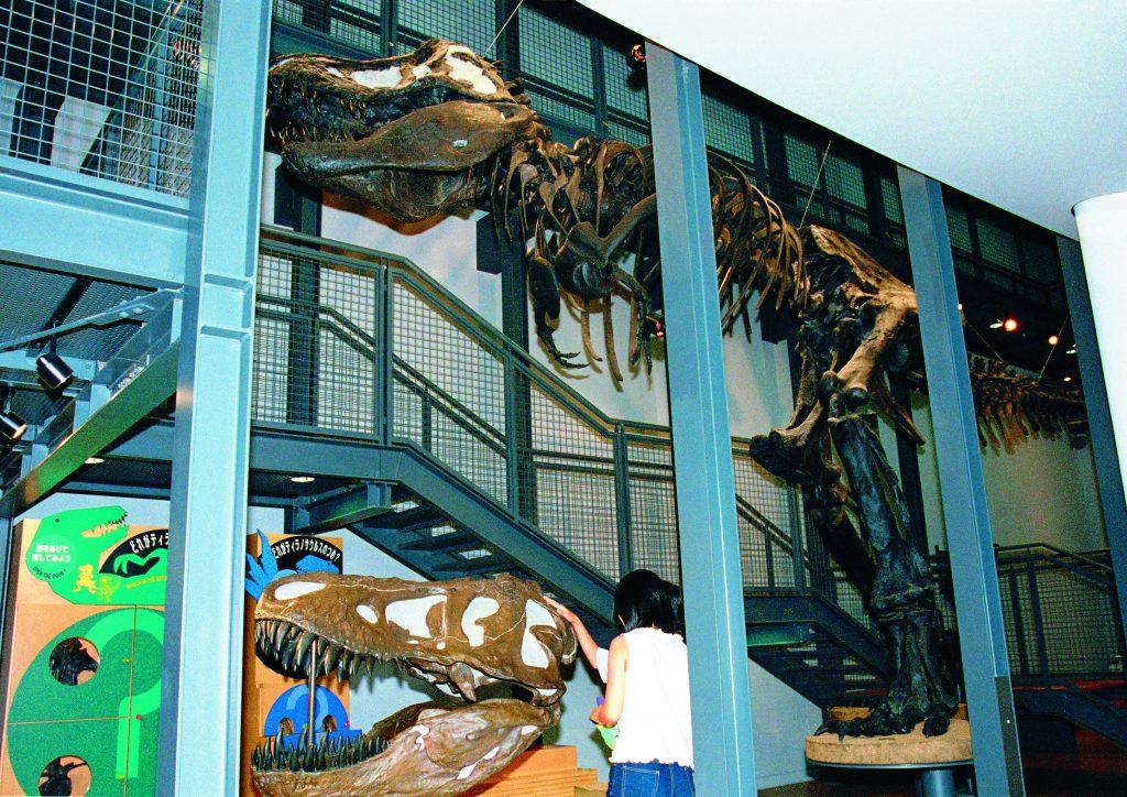 ティラノサウルスの全身骨格標本/福井県立恐竜博物館(福井県/勝山市)