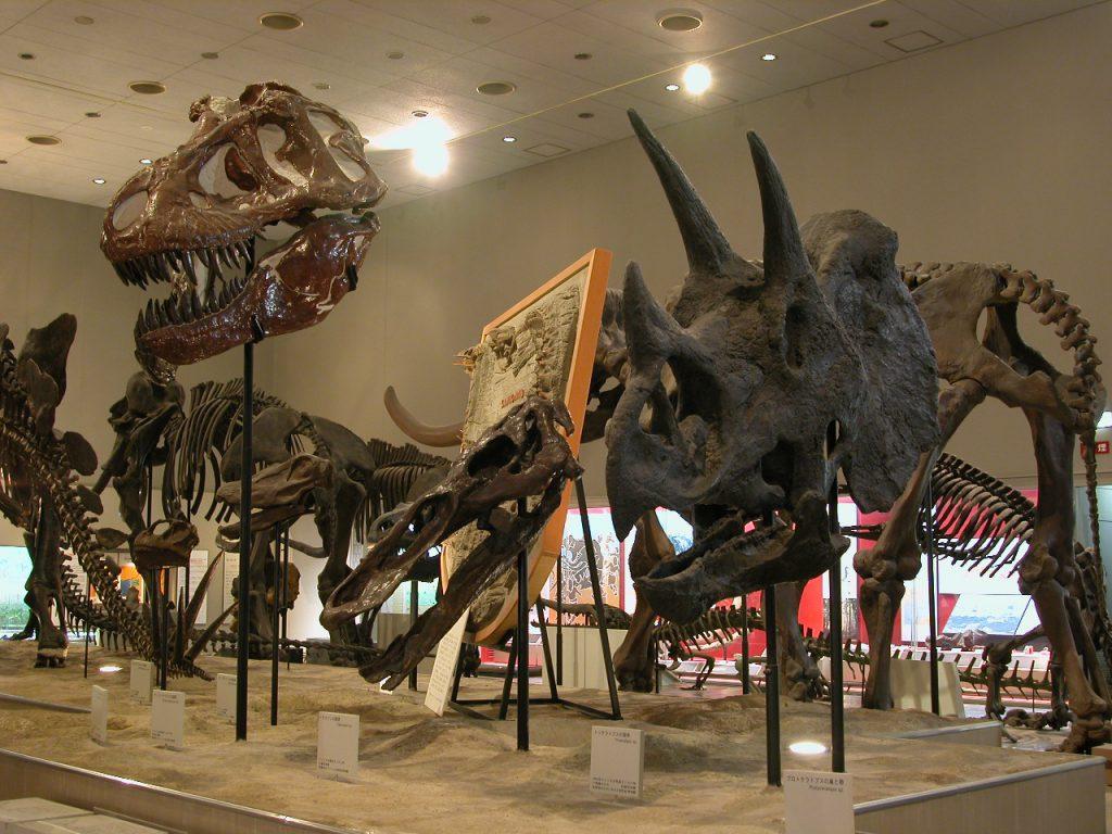 恐竜の頭骨/大阪市立自然史博物館(大阪府/大阪市)
