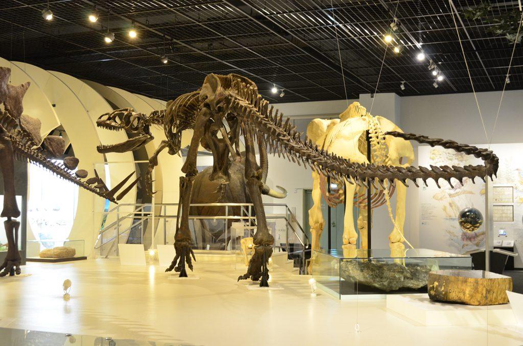 アロサウルスの全身骨格標本/姫路科学館 アトムの館(兵庫県/姫路市)