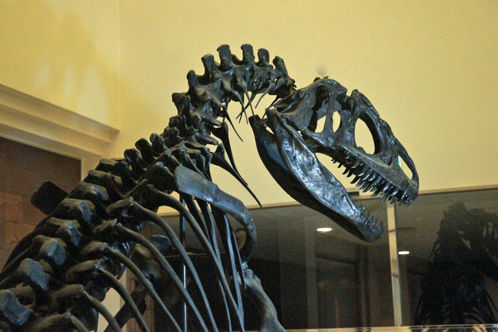アロサウルスの全身骨格標本/奥出雲多根自然博物館(島根県/仁多郡)