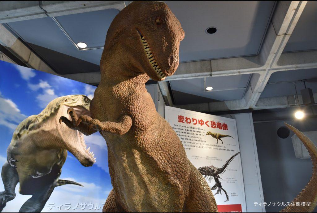 ティラノサウルスの復元模型/佐賀県立博物館(佐賀県/佐賀市)