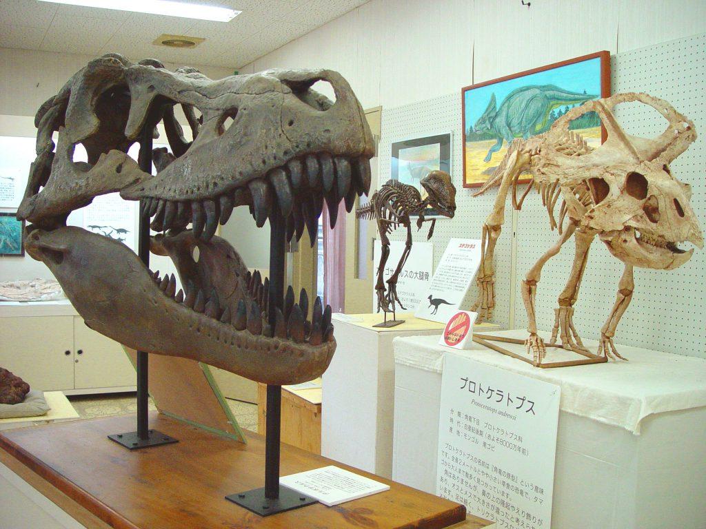 タルボサウルスの頭骨など/天草市立御所浦白亜紀資料館(熊本県/天草市)