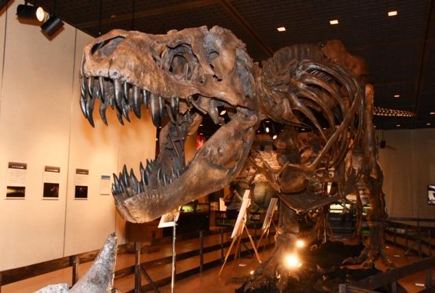 ティラノサウルスの全身骨格標本/鹿児島県歴史資料センター黎明館(鹿児島県)