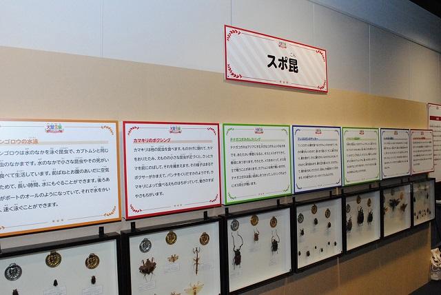 虫たちがもつチカラを標本やパネルでわかりやすく紹介/大昆虫展in東京スカイツリータウン(東京都)