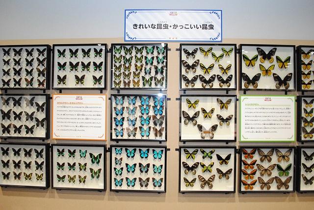 標本展示「きれいな昆虫・かっこいい昆虫」/大昆虫展in東京スカイツリータウン(東京都)