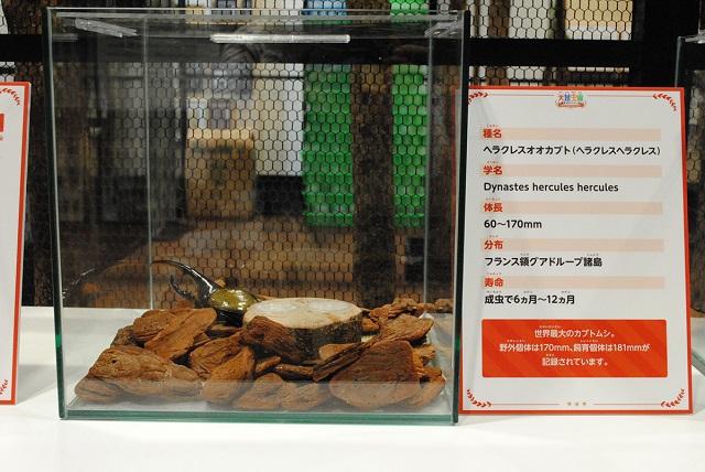 生きている昆虫の展示/大昆虫展in東京スカイツリータウン(東京都)