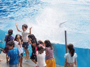ずぶ濡れ体験!夜の水族館!2019年水族館の夏イベント16選