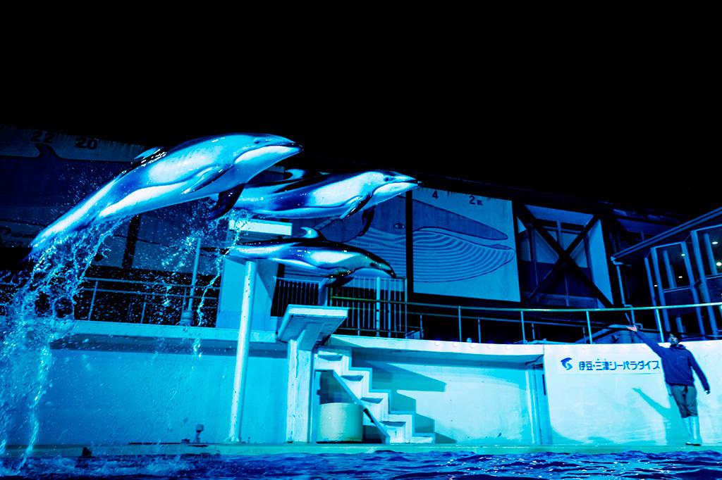 イルカなどが出演する「ナイトショー」/伊豆・三津シーパラダイス(静岡県/沼津市)