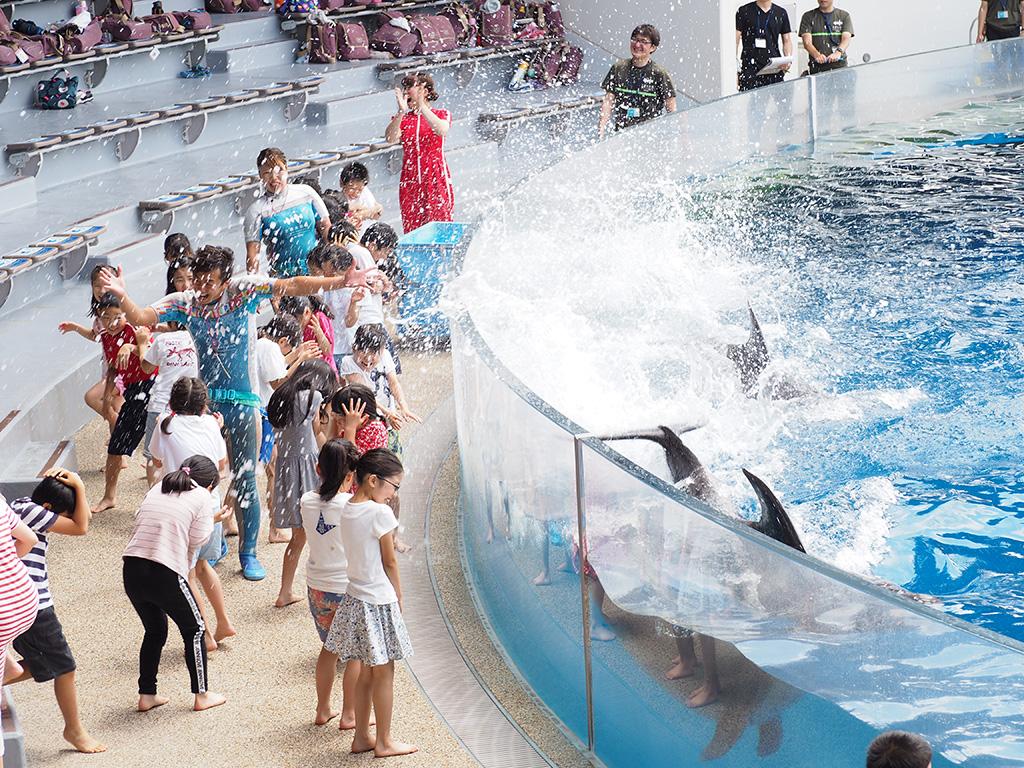 夏限定ウォーターアトラクションプログラム「BASSHAAAAN!!」/京都水族館(京都府/京都市)
