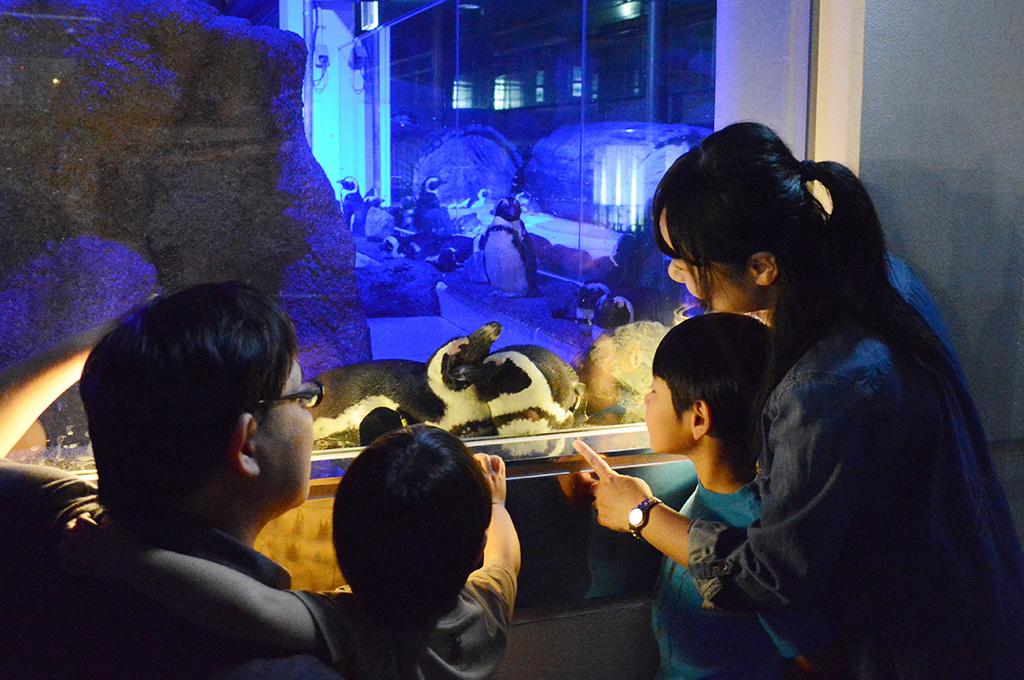 夜のすいぞくかん/京都水族館(京都府/京都市)