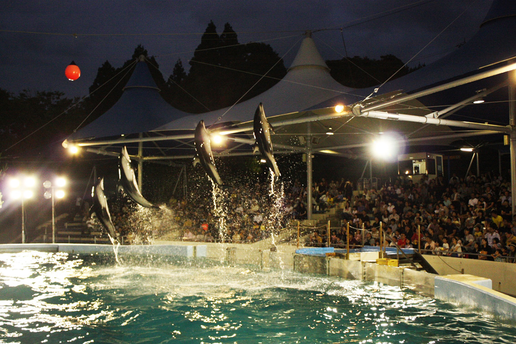 夜のイルカショー/のとじま水族館(石川県/七尾市)