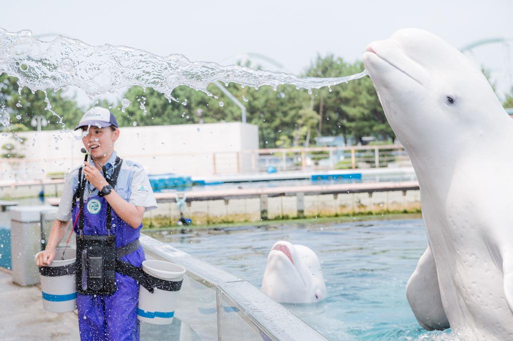 クールピクスW150を持ってもってシロイルカに会う/横浜・八景島シーパラダイス(神奈川県/横浜市金沢区)