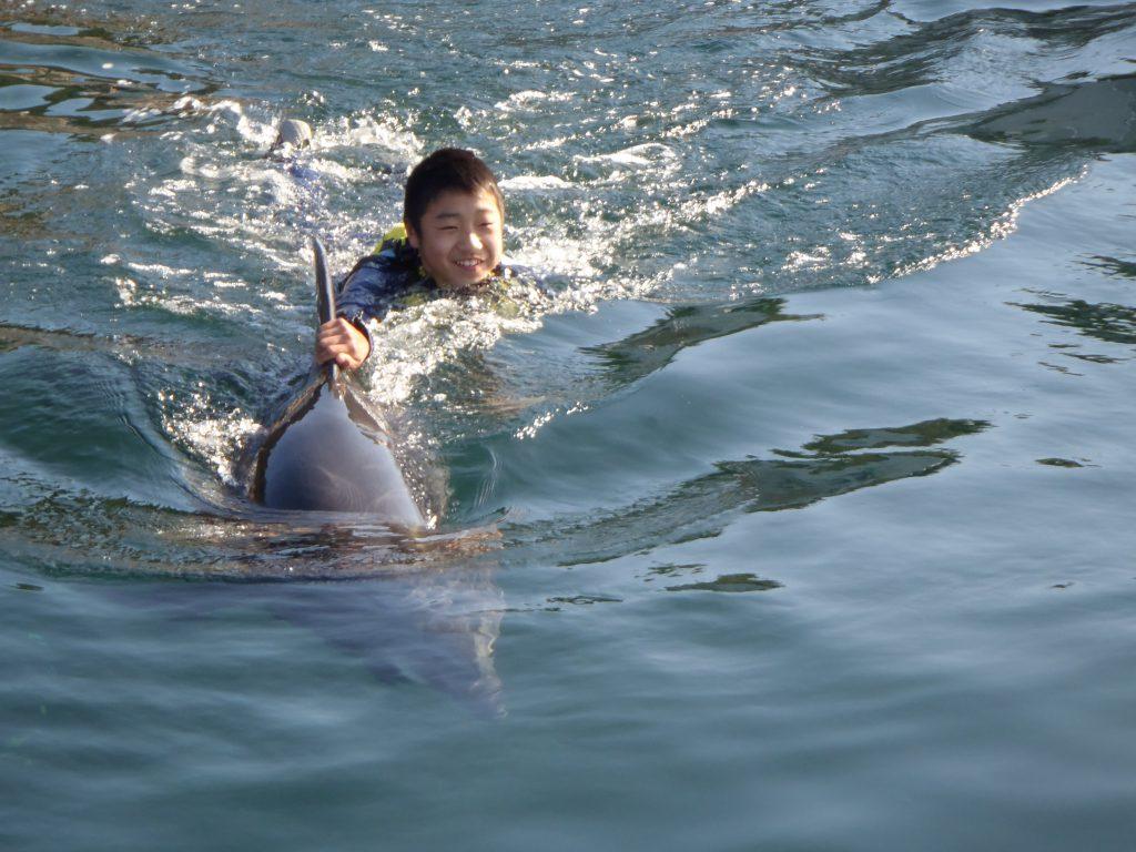 イルカの背びれや胸びれにつかまって泳げる/淡路じゃのひれ・ドルフィンファーム(兵庫県/南あわじ市)