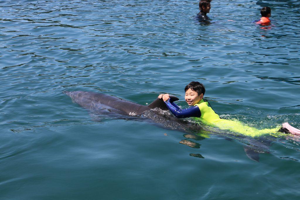 イルカの背びれにつかまって泳ぐ体験/ドルフィン・ベェイス (和歌山県/太地町)