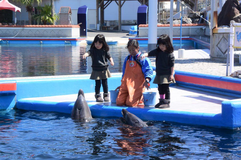 イルカのエサやり体験/志布志湾海の駅 海鮮市場&イルカランド(宮崎県/串間市)