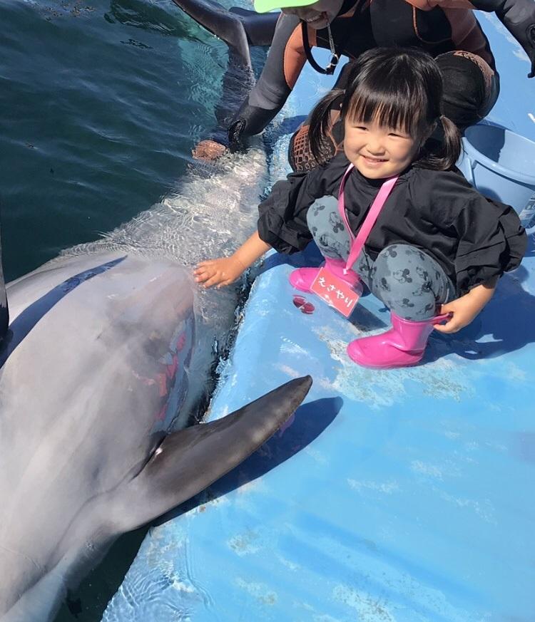 えさやり体験のイルカにタッチの様子/ドルフィンリゾート(和歌山県/太地町)
