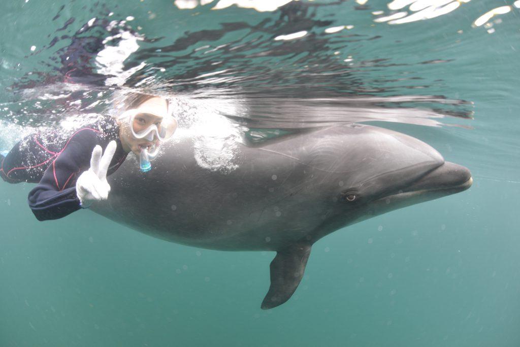 イルカと同じ目線で遊べるドルフィンスイムコース/ドルフィンファンタジー伊東(静岡県/伊東市)