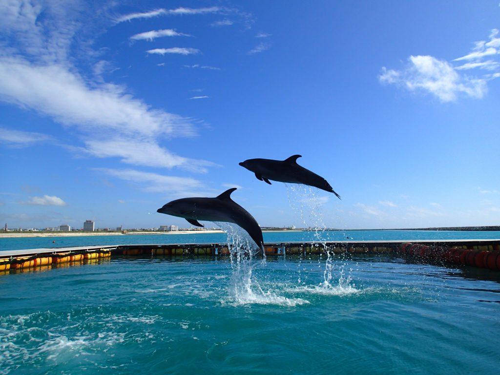 イルカのジャンプ/ドルフィンファンタジー石垣島(沖縄県/石垣市)