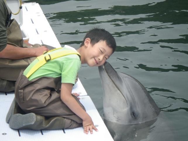 イルカとの触れあい/ドルフィンファームしまなみ(愛媛県/今治市)
