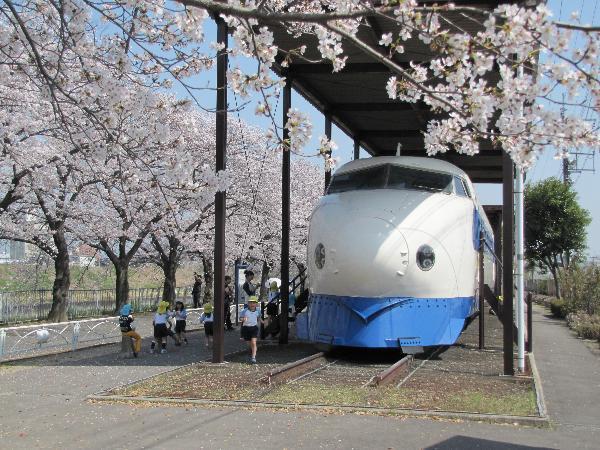 0系新幹線の車両展示と桜/新幹線公園(大阪府/摂津市)
