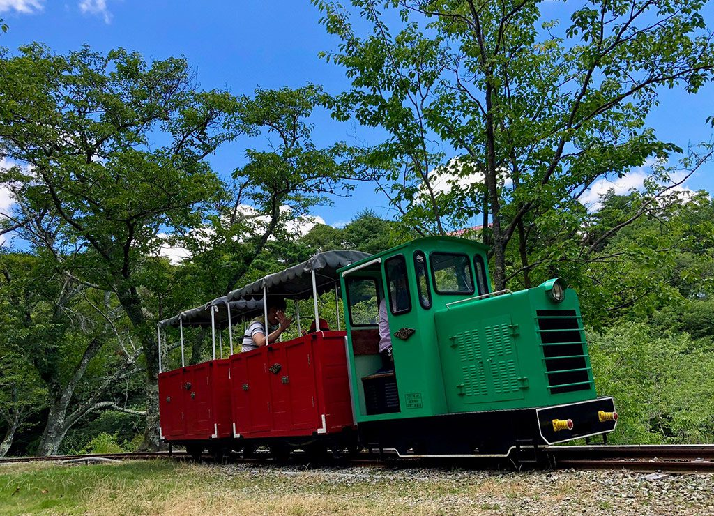 森の中を走るミニトロッコ列車/妙見の森シグナス森林鉄道(兵庫県/川西市)