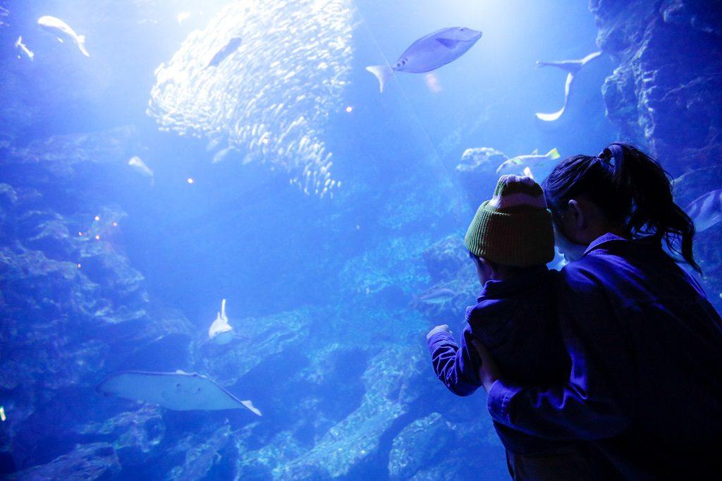 水槽を見つめる子どもたち/京都水族館(京都府/京都市)