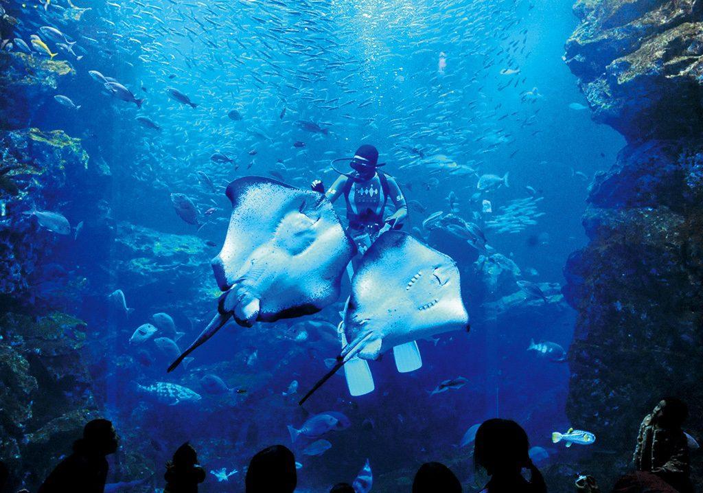 エイやマイワシが飼育スタッフの周りに集まる「魚たちのごはんタイム」/京都水族館(京都府/京都市)