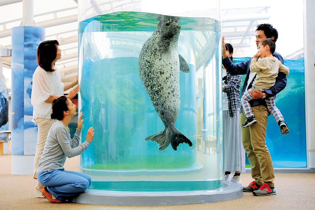 円柱型水槽を上下に行き来するゴマフアザラシ/京都水族館(京都府/京都市)