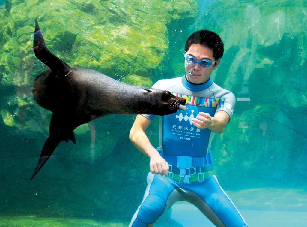 ミナミアメリカオットセイに水中でごはんをあげるようす/京都水族館(京都府/京都市)