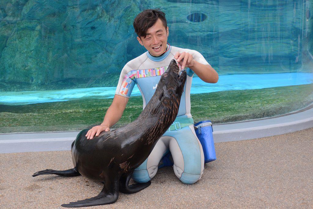 ミナミアメリカオットセイに飼育スタッフがごはんをあげるようす/京都水族館(京都府/京都市)