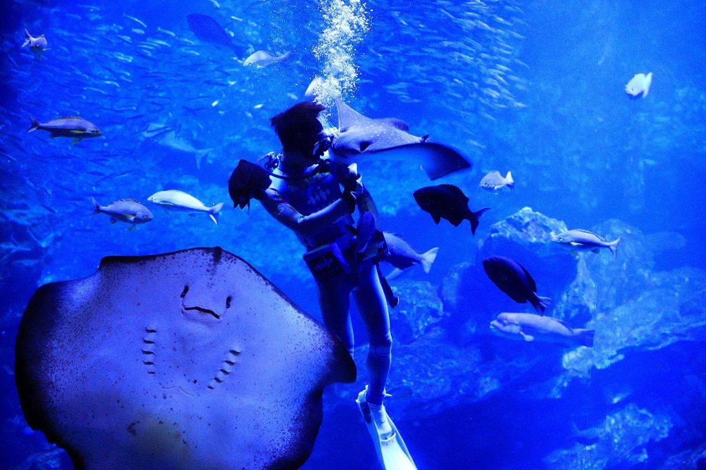 飼育スタッフからごはんをもらうエイが迫力/京都水族館(京都府/京都市)