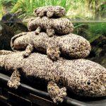オオサンショウウオが人気!「京都水族館」は水が豊かな京都がテーマ