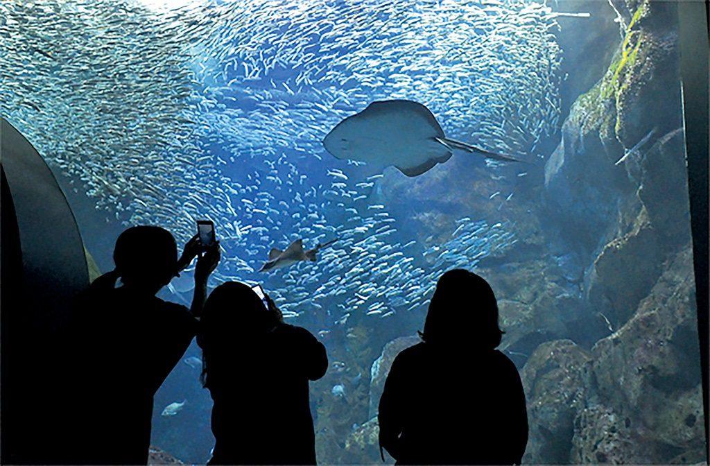 マリントンネルから見上げる日本海大水槽は幻想的/新潟市水族館マリンピア日本海(新潟県/新潟市)