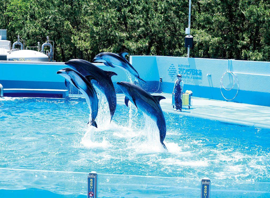 イルカのジャンプが迫力のイルカショー/新潟市水族館マリンピア日本海(新潟県/新潟市)